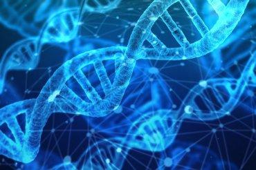 Hlavní obrázek článku - Správný vývoj thymocytů brání vzniku autoimunitních nemocí