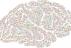 Hlavní obrázek - Neurovývojová porucha s mentální retardací spojená s genem PPP2R5D – první případ v České republice